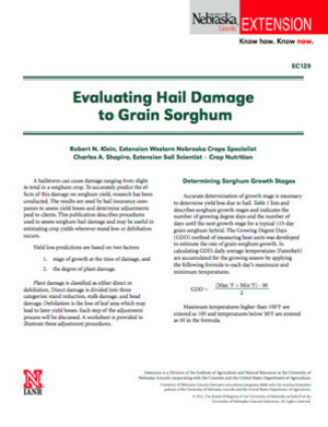Evaluating Hail Damage to Grain Sorghum