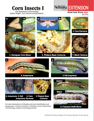 Corn Insects I