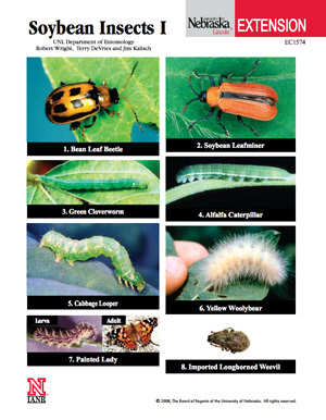 Soybean Insects I