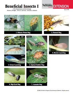 Beneficial Insects I