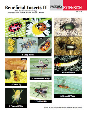 Beneficial Insects II