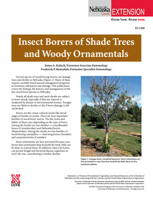 Borers of Shade Trees and Woody Ornamentals