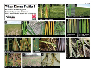 Wheat Disease Profiles I