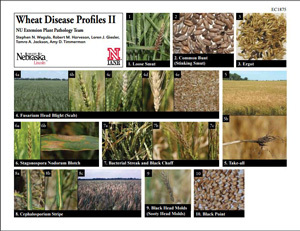 Wheat Disease Profiles II