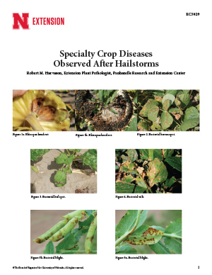 Specialty Crop Diseases Observed After Hailstorms (EC3029)