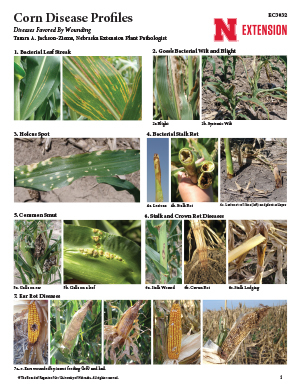 Corn Disease Profiles (EC3032)