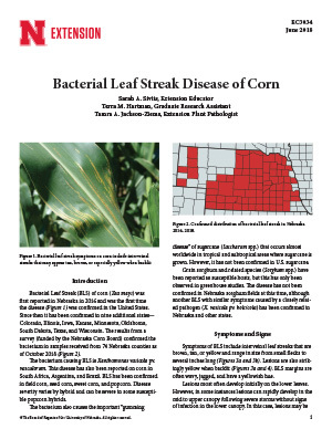 Bacterial Leaf Streak Disease of Corn (EC3034)
