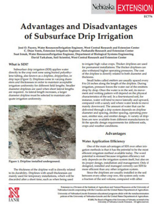 Advantages and Disadvantages of Subsurface Drip Irrigation