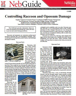 Controlling Raccoon and Opossum Damage