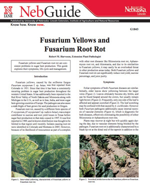 Fusarium Yellows and Fusarium Root Rot