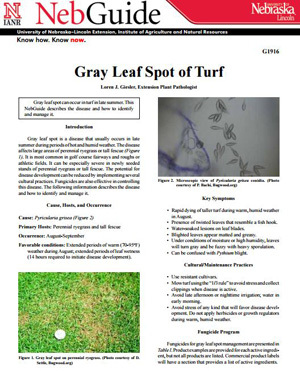 Gray Leaf Spot of Turf
