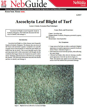 Ascochyta Leaf Blight of Turf