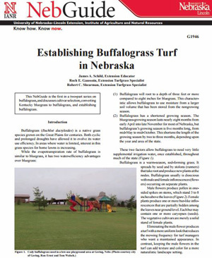 Establishing Buffalograss Turf in Nebraska