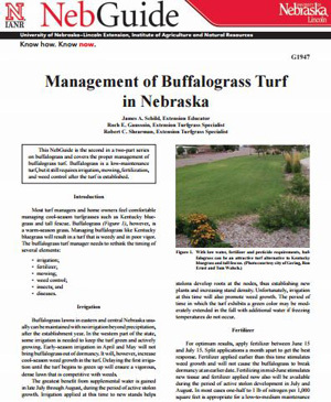 Management of Buffalograss Turf in Nebraska