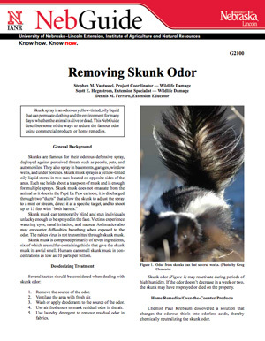 Removing Skunk Odor