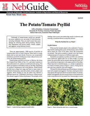The Potato/Tomato Psyllid