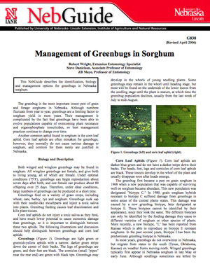 Management of Greenbugs in Sorghum
